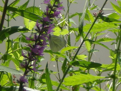 FOTKA - nepovedený motýl
