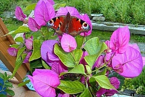 FOTKA - Taky motýl - ať je přemotýlováno!