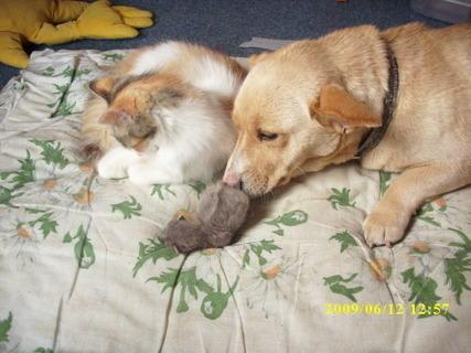 FOTKA - kočka,pes a kotě nebo štěně?