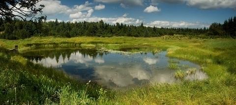 FOTKA - Malý Radní rybník
