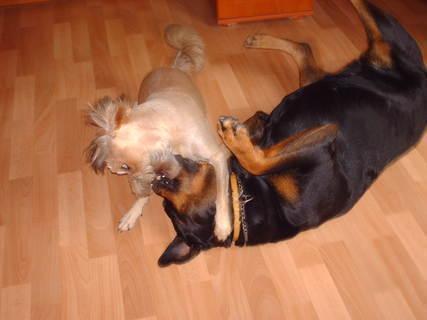 FOTKA - Roxy a Aisha se perou - 12.8.2009 , ráno.