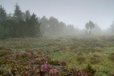 FOTKA - Grünwaldské rašeliniště