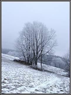 FOTKA - stromy