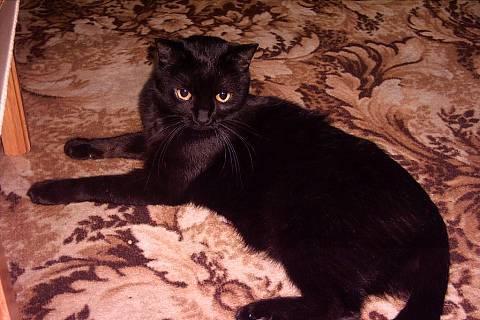 FOTKA - kočička Minda