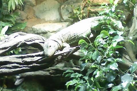 FOTKA - krásná ještěrka