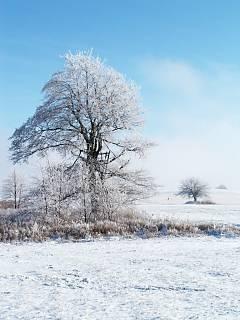 FOTKA - Jako v Mrazíkovi