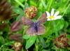 Motýlí louka