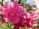 řecká květena 1