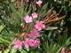 řecká květena 2