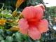 řecká květena 3