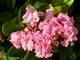 řecká květena 6