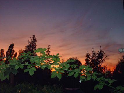 FOTKA - Moja beztrnná ostružina  a západ slunce - 15.8.21009.