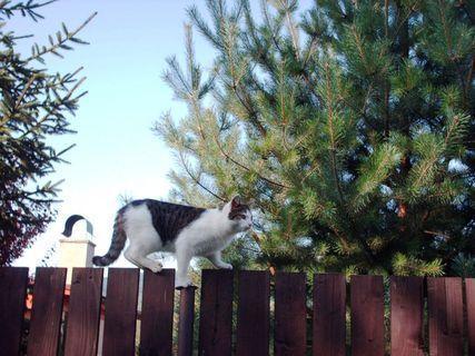 FOTKA - Nelly na plotě - 16.8.2009.