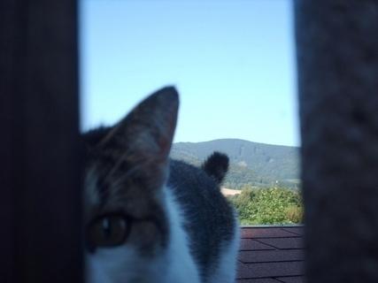 FOTKA - Nelly za plotem u sousedů - 16.8.2009.