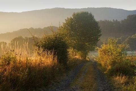FOTKA - V ranním slunci