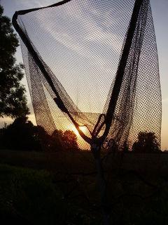 FOTKA - Sluníčko v podběráku