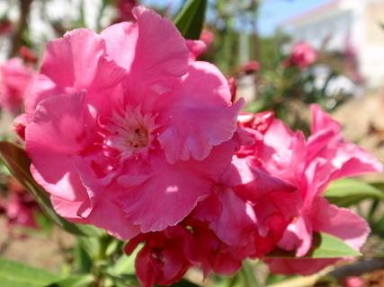FOTKA - řecká květena 1
