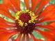Květ 5