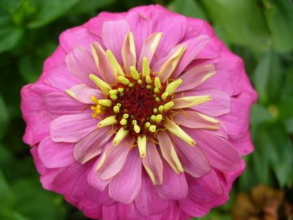 FOTKA - Květ2