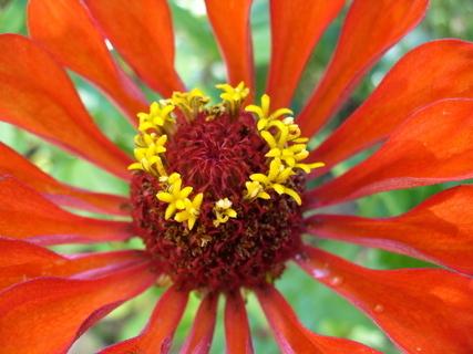 FOTKA - Květ 5