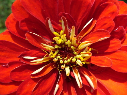 FOTKA - Květ6