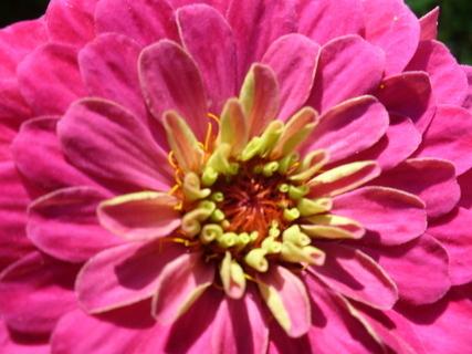 FOTKA - Květ7