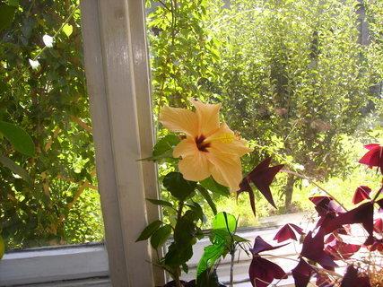 FOTKA - květina1