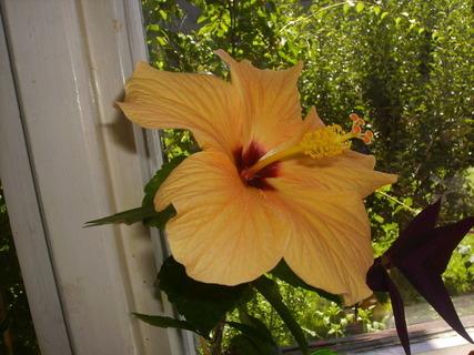 FOTKA - květina2