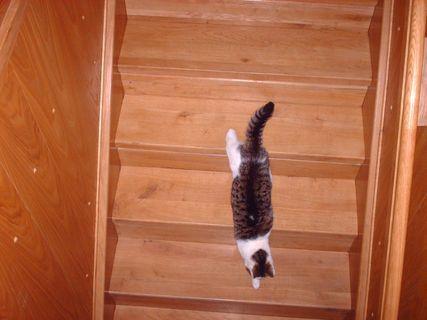 FOTKA - Nelly  utíká po schodech ven - 29.8.2009.