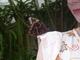 Motýl na rameni - Botanická zahrada