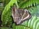 Motýli - Botanická zahrada