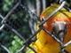 papoušek v zoo5
