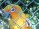 papoušek v zoo6