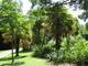 Clyne garden - palmy