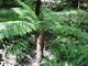 Clyne garden - taková malá kapradinka