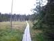 cesta Mrtvým lesem v Černohorském rašeliništi
