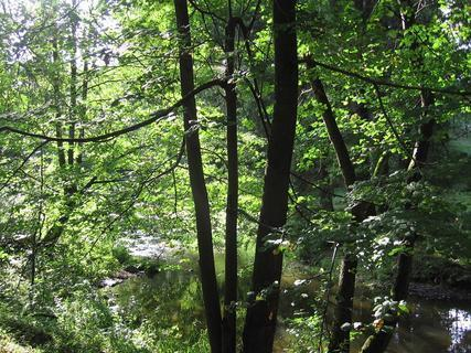 FOTKA - V lese 1