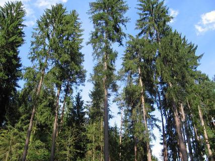 FOTKA - V lese 2