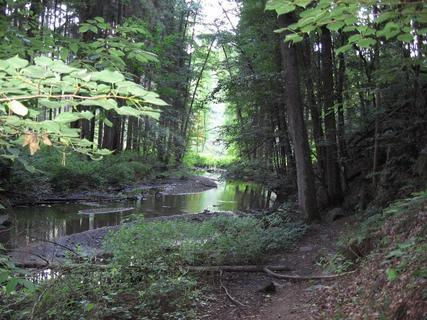 FOTKA - V lese 4