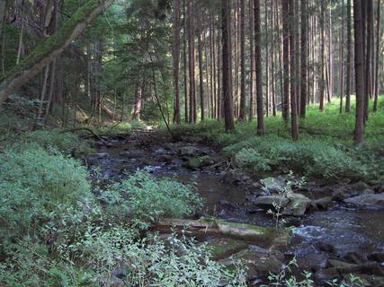 FOTKA - V lese 5