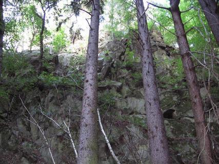 FOTKA - V lese 6