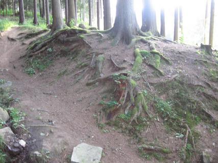 FOTKA - V lese 7
