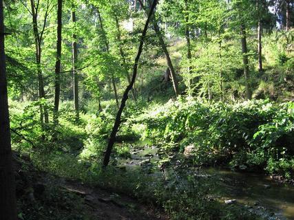 FOTKA - V lese 8