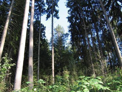 FOTKA - V lese 9