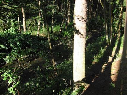 FOTKA - V lese 10