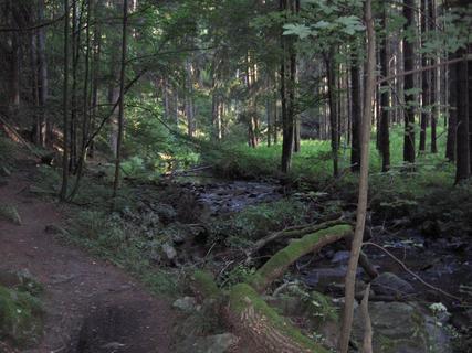 FOTKA - V lese 11