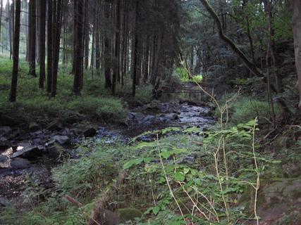 FOTKA - V lese 12