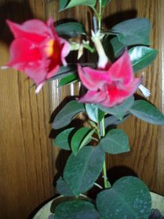 FOTKA - pnoucí květina