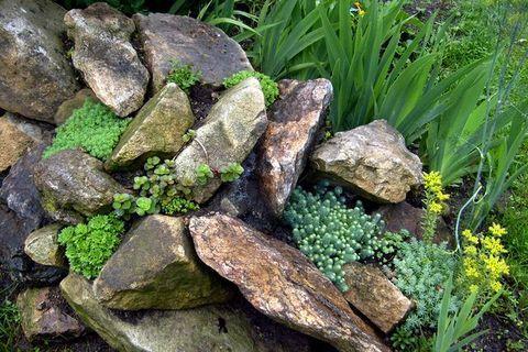 FOTKA - Mezi kameny - skalka, o které jsem myslela, že tam nic neporoste