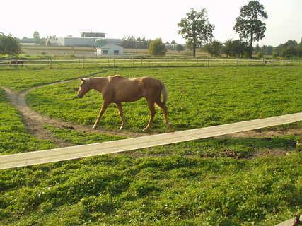 FOTKA - Louka s koníkem